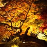 紅葉を愛知県で見るならココ!ライトアップも綺麗なスポット3選